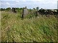 SK0565 : Hollinsclough Moor Trig Point by Rude Health