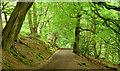 J4077 : Path and trees, Redburn Country Park, Holywood - July 2014(1) by Albert Bridge