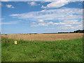 TF7739 : Wheat crop field by Sunderland Farm by Evelyn Simak
