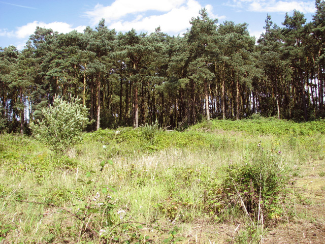 Small wood beside Brancaster Road