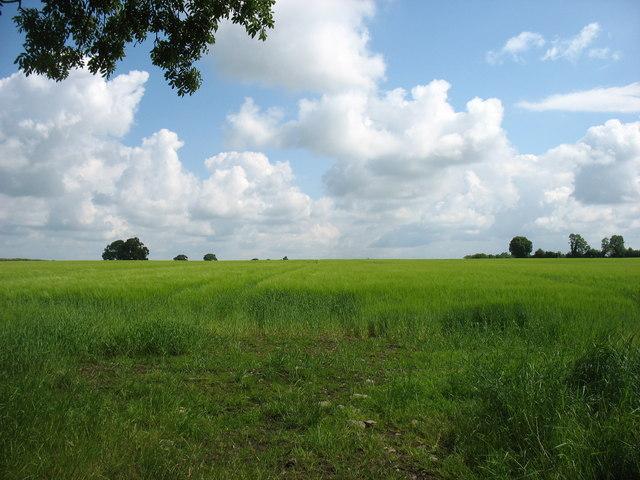 Farmland east of Killeigh
