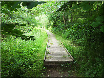 NT6929 : Boardwalk on the Borders Abbeys Way by Oliver Dixon