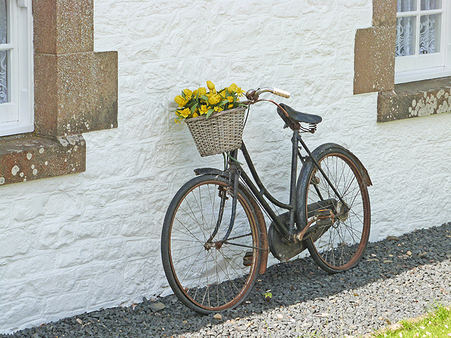 The bicycle as planter