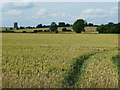 TL1434 : View across a cornfield, Stondon by Humphrey Bolton