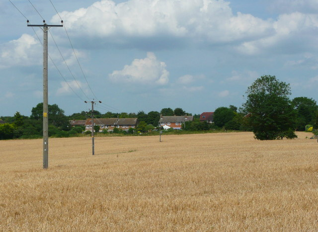 Electricity poles across a cornfield, Lower Stondon