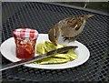 NU1241 : Lindisfarne sparrow by kim traynor