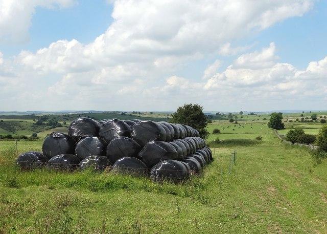 Bales of silage at Whitelow