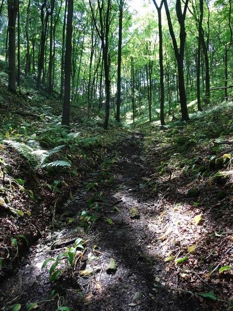 Path through Griffe Wood