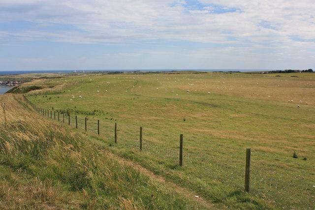 Sheep pasture near Wolds Farm