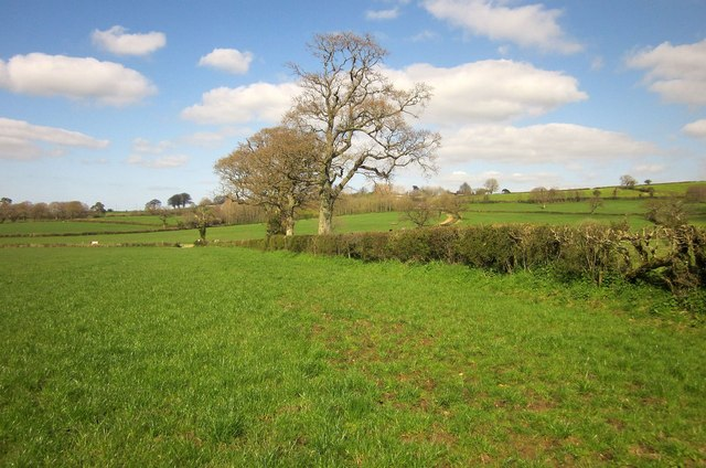 Field boundary near West Dibberford Farm