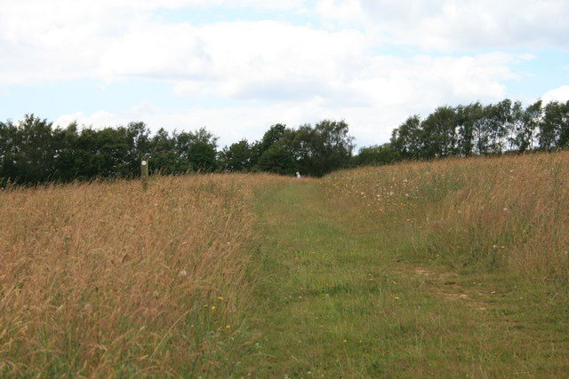 Bridleway 85 on Banstead Heath