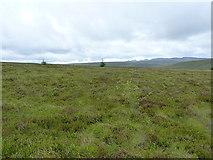 SH8142 : A small woodland beginning by Richard Law