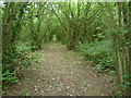 TQ8649 : The Greensand Way passing through coppiced woodland by Marathon