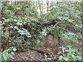 TG1721 : Overgrown pillbox north of Heath Road by Evelyn Simak