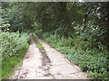 TG1521 : Concrete road in Haveringland Hall Park by Evelyn Simak