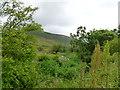 NS6308 : Summer vegetation at Blackcraig by Alan O'Dowd
