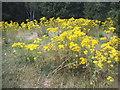 TQ2272 : Wild flowers on Wimbledon Common by David Howard