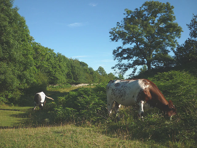Conservation grazing, Jack Scout