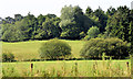 J3066 : Fields and trees near the Drum Bridge and Dunmurry by Albert Bridge