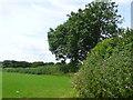 SY4399 : Hedgerow near Blackney by Nigel Mykura