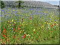 NT2475 : Poppy field at the Royal Botanic Garden Edinburgh by M J Richardson