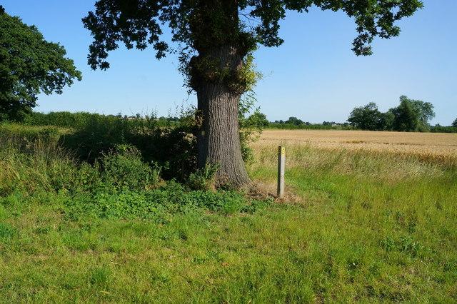 Footpath marker near Lime Field Farm