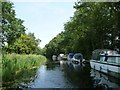 SS9912 : Boats moored at East Manley, Grand Western Canal by Christine Johnstone