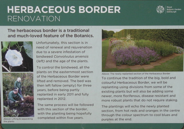 Renovating the herbaceous border