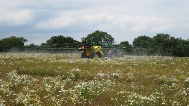 Spraying oilseed rape east of Warenford