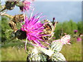 NZ2050 : Honey Bee by brian clark