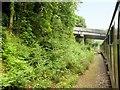 SU7138 : Mid-Hants Railway, The Bridge at Borovere Lane by David Dixon