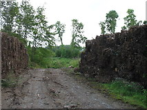 W9997 : Forestry operations near Ballyduff by David Purchase