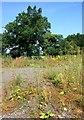 SU8172 : Weeds on the Waste Ground by Des Blenkinsopp