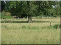 SU8275 : Paddocks off Uncles Lane by Alan Hunt