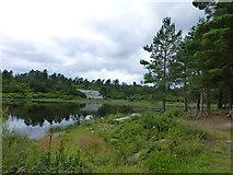 NU0702 : Nelly Moss North Lake by Raymond Knapman