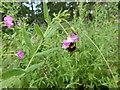 TF0529 : Bee! by Bob Harvey