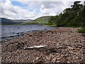F9701 : Driftwood on the shores of Lough Feeagh by Ian Paterson