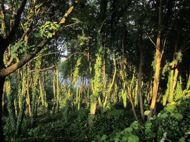 Woodland, Oddicombe Beach Hill