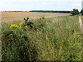 TF7431 : Wheatfield and the Peddars' Way near Anmer by Richard Humphrey