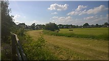 TQ0866 : Fields of Shepperton by James Emmans