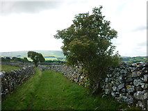 SE0064 : Burnsall and Thorpe Fell from Bank Lane by Carroll Pierce