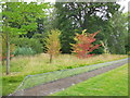 TQ4123 : Sapling in Sheffield Park by Paul Gillett
