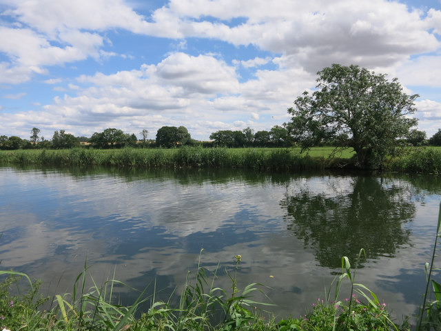 Tree by Great Ouse