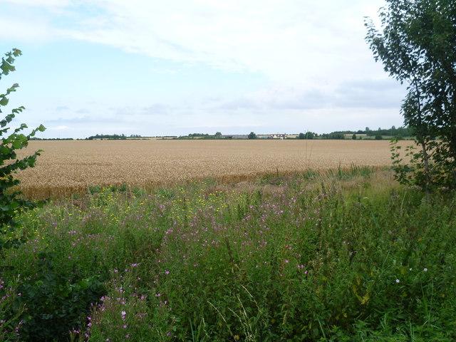 Looking towards Depden Farm