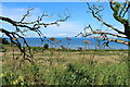 NS3019 : Scrubland at Greenan by Billy McCrorie