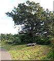 ST3190 : Oak leaf bench under an oak, Malpas, Newport by Jaggery