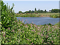 SK7958 : River Trent at North Muskham by Alan Murray-Rust