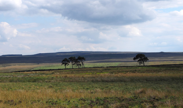 Moorland with trees