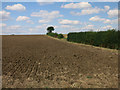 TL2566 : Hedgerow in arable land by Hugh Venables