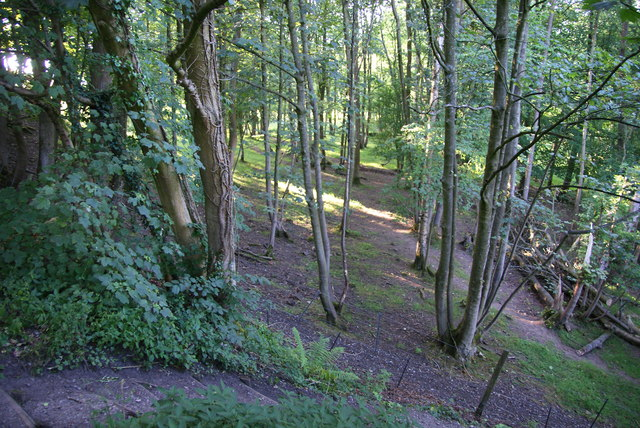 Woodland at Crook o'Lune